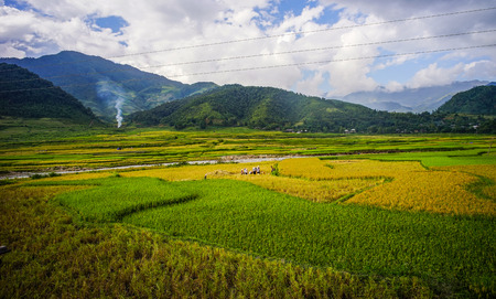 Terraced rice field at summer in Sapa, Northern Vietnam. Terraced paddy fields are built into steep hillsides by intense physical labor.