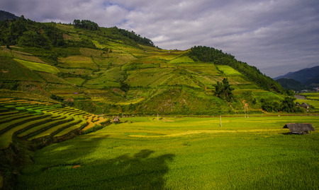 Terraced rice field at sunny day in Lao Cai Province, Northern Vietnam.