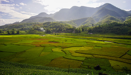 Terraced rice field with mountains at sunny day in Northern Vietnam.