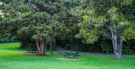 Benches at botanic garden in Christchurch, New Zealand.