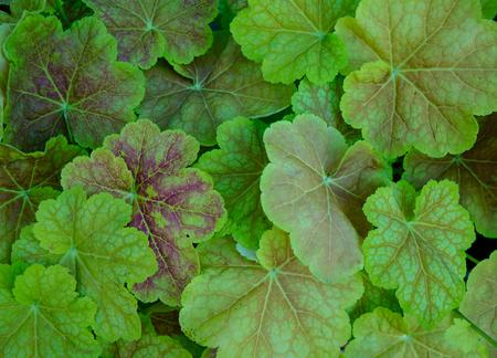 Green leaves under sun light at the botanic garden.