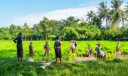 An Giang, Vietnam - Sep 2, 2017. Khmer women working on paddy rice field in An Giang, Vietnam. An Giang is a province in Mekong Delta, bordering Cambodia.