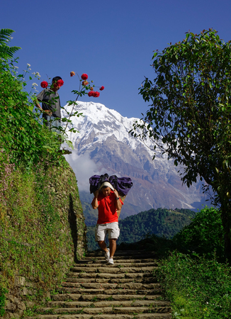 Ghandruk, Nepal - Oct 21, 2017. A porter carrying large luggages on Annapurna Mountains in Ghandruk, Nepal.