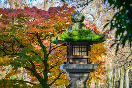 A Japanese ancient stone lantern with autumn park background.