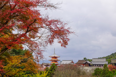 Kiyomizu Temple with autumn forest at sunny day in Kyoto, Japan.