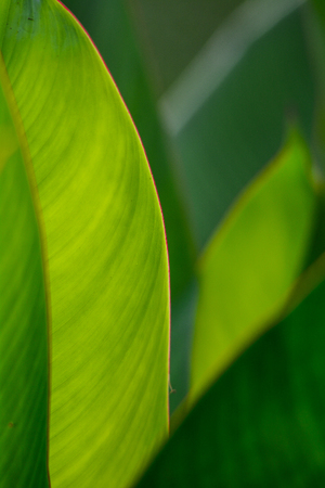 Close-up of green leaves at Japanese garden in spring time.