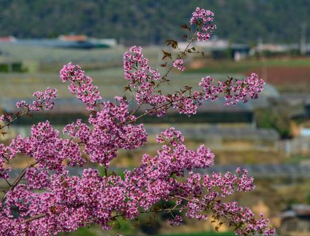 Cherry blossom at botanic garden in spring time.