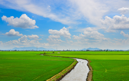 Green rice field in An Giang, Southern Vietnam.