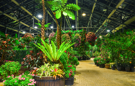 Exotic rainforest trees and plants at greenhouse in night.