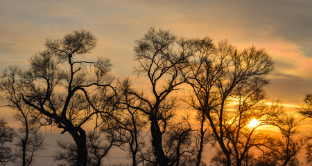Sunset on trees at winter in Jilin, Northern China.