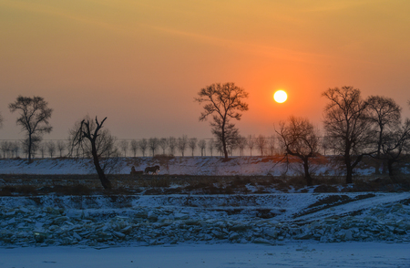 Sunset scenery at winter with many trees and empty field.