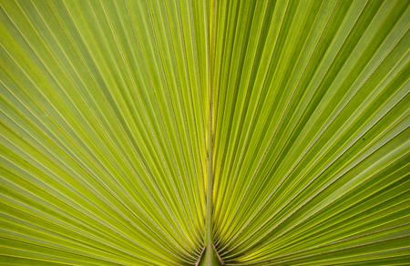 Leaf at the botanic garden. Nature background. Leaf texture.
