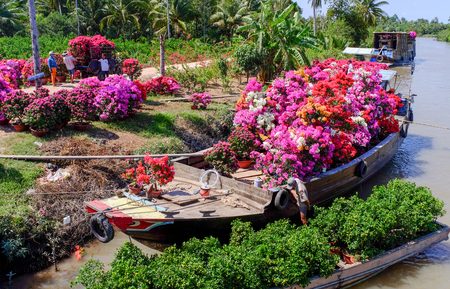 Can Tho, Vietnam - Jan 31, 2016. People loading flowers to cargo boats at spring time in Can Tho, Vietnam.