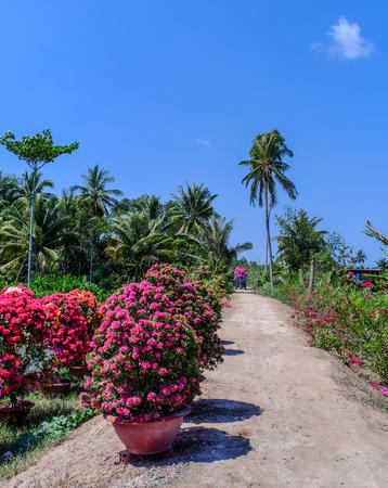 Flower plantation in Ben Tre Province, Mekong Delta, Vietnam Imagens