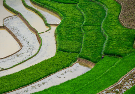 Terraced rice field at sunny day in Sapa, Vietnam. Sa Pa is famous for the terraced rice fields in North of Vietnam.