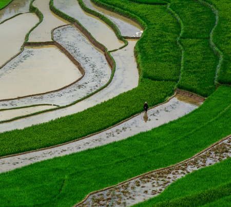 Terraced rice field at summer day in Sapa, Vietnam. Sa Pa is famous for the terraced rice fields in North of Vietnam.