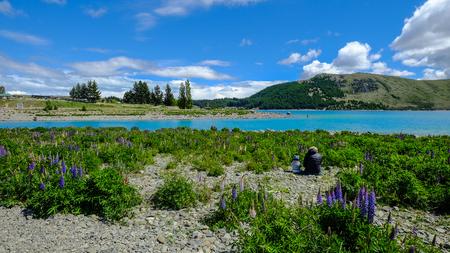 Landsape of Mackenzie Country, South Island, New Zealand.
