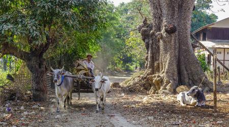 Mandalay, Myanmar - Feb 10, 2017. Ox cart running on rural road at sunny day in Mandalay, Myanmar.