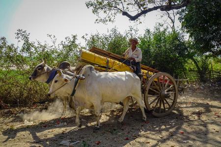 Mandalay, Myanmar - Feb 10, 2017. Ox cart running on rural road at sunny day in Mandalay, Myanmar. Redakční