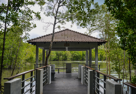 Walking trail through the thick natural mangrove jungle via our 800 meters long board walk in Langkawi, Malaysia.