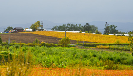 Rural scenery with beautiful  fields at autumn in Biei, Japan.