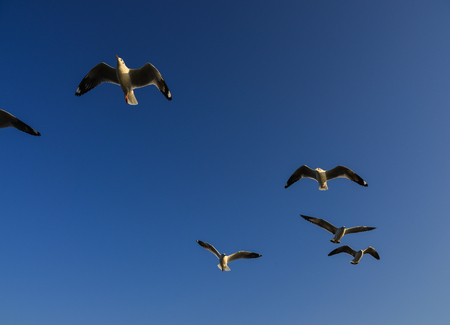 Seagull flying in the blue sky at summer day.