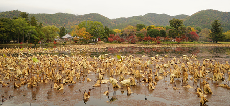 Lake scenery with autumn trees in Kyoto, Japan. Banco de Imagens