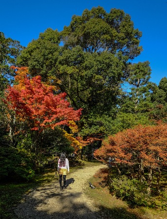 A woman walking at autumn garden in Kyoto, Japan.