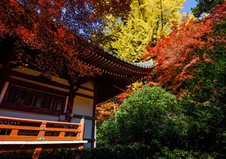 Autumn trees at ancient garden in Kyoto, Japan. 免版税图像