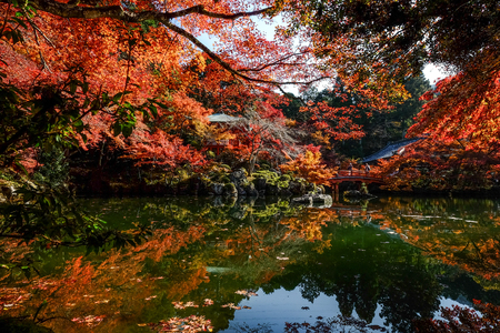 Autumn trees with the pond at ancient garden in Kyoto, Japan. 免版税图像