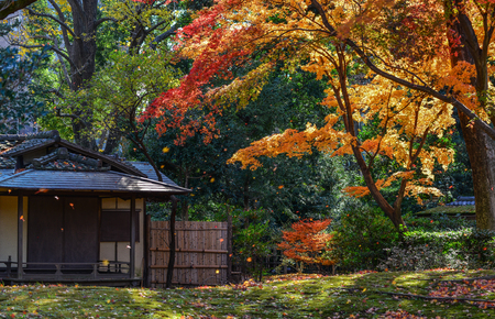 Alberi di acero con foglie colorate in giardino d'autunno a Tokyo, Giappone.