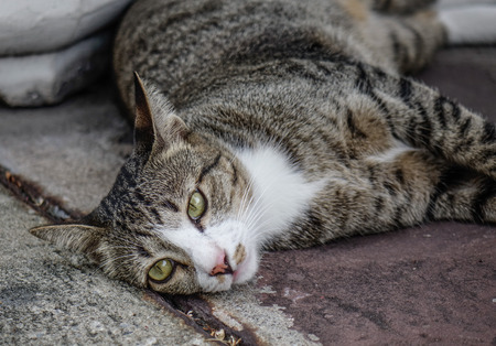 A lazy cat relaxing at old house in Bangkok, Thailand.