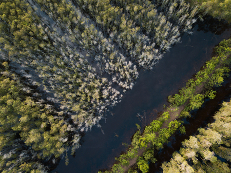 Aerial view of Melaleuca tree forest in Mekong Delta, Southern Vietnam. Taken by drone (flycam).