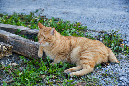 A pretty cat relaxing on road in Bern, Switzerland.