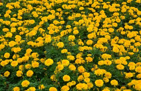 Small flowers for decoration at city park of Nanning, China.