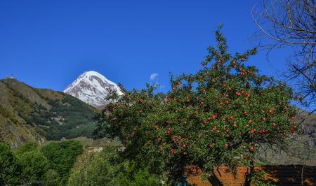 Apple tree with mountain background at sunny day in Kazbegi, Georgia.