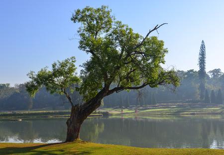 Botanic garden at spring time in Pyin Oo Lwin, Myanmar. 報道画像