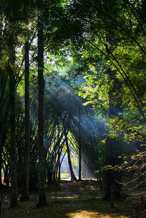 Jardín botánico en primavera en Pyin Oo Lwin, Myanmar. Foto de archivo