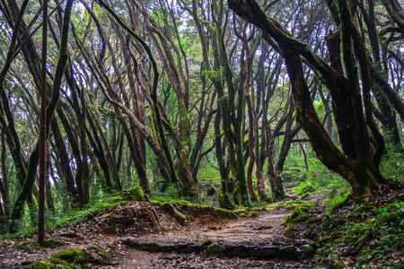 Hiking trail in green summer forest near Annapurna Massif, Nepal.