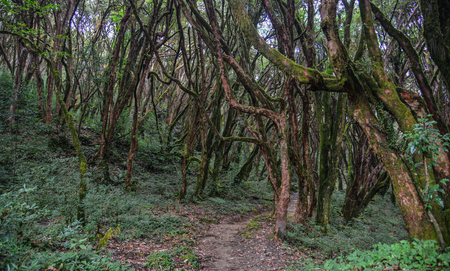 Hiking trail in green summer forest near Annapurna Massif, Nepal. Stok Fotoğraf