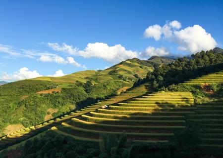 Giacimento a terrazze del riso ad estate in Mai Chau Township, Vietnam del Nord.