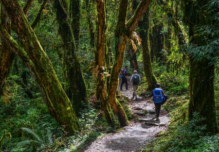Pokhara, Nepal - Oct 21, 2017. People trekking at deep forest near Annapurna Massif, Nepal. Redakční