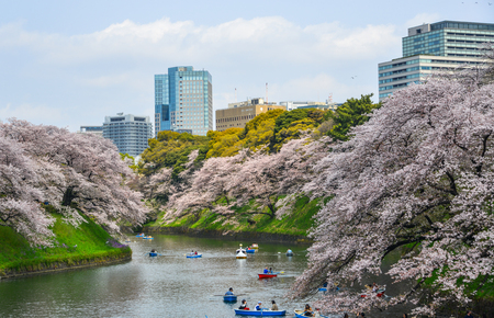 Tokyo, Japan - Apr 7, 2019. People enjoy cherry blossoms from rowing boats at Chidorigafuchi Park in Tokyo, Japan. Standard-Bild