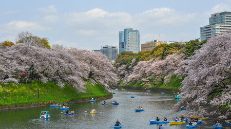 Tokyo, Japan - Apr 7, 2019. People enjoy cherry blossoms from rowing boats at Chidorigafuchi Park in Tokyo, Japan. Stock Photo