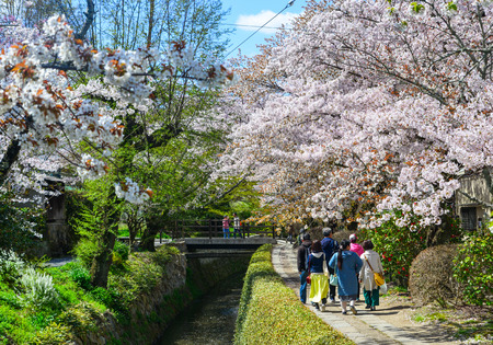 Kyoto, Japan - Apr 9, 2019. People walking on the Philosopher Path for cherry blossom (sakura) viewing. Sakura has been celebrated in Japan for many centuries.