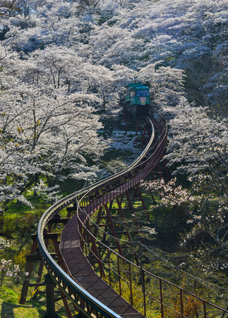 Fukushima, Japan - Apr 15, 2019. Slope car passing Sakura Tunnel at Funaoka Castle Ruin Park in Fukushima, Japan. Publikacyjne