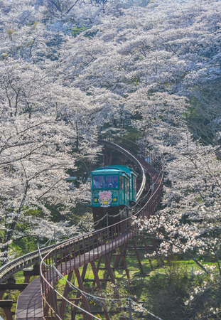 Fukushima, Japan - Apr 15, 2019. Slope car passing Sakura Tunnel at Funaoka Castle Ruin Park in Fukushima, Japan. Redakční