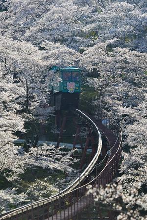 Fukushima, Japan - Apr 15, 2019. Slope car passing Sakura Tunnel at Funaoka Castle Ruin Park in Fukushima, Japan. Redactioneel