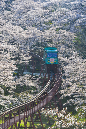 Fukushima, Japan - Apr 15, 2019. Slope car passing Sakura Tunnel at Funaoka Castle Ruin Park in Fukushima, Japan. 版權商用圖片 - 122862312