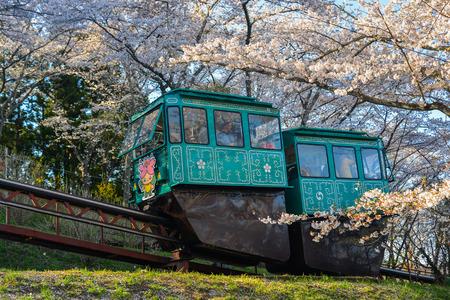 Fukushima, Japan - Apr 15, 2019. Slope car passing Sakura Tunnel at Funaoka Castle Ruin Park in Fukushima, Japan. Zdjęcie Seryjne - 122862327